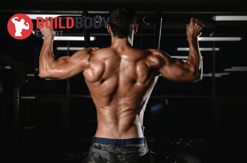 Мышечные волокна и силовые тренировки