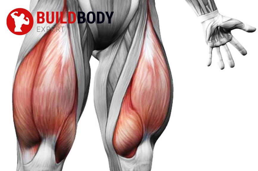 сильная четырехглавая мышца делает колени выносливей и в разы снижает риски получить травму
