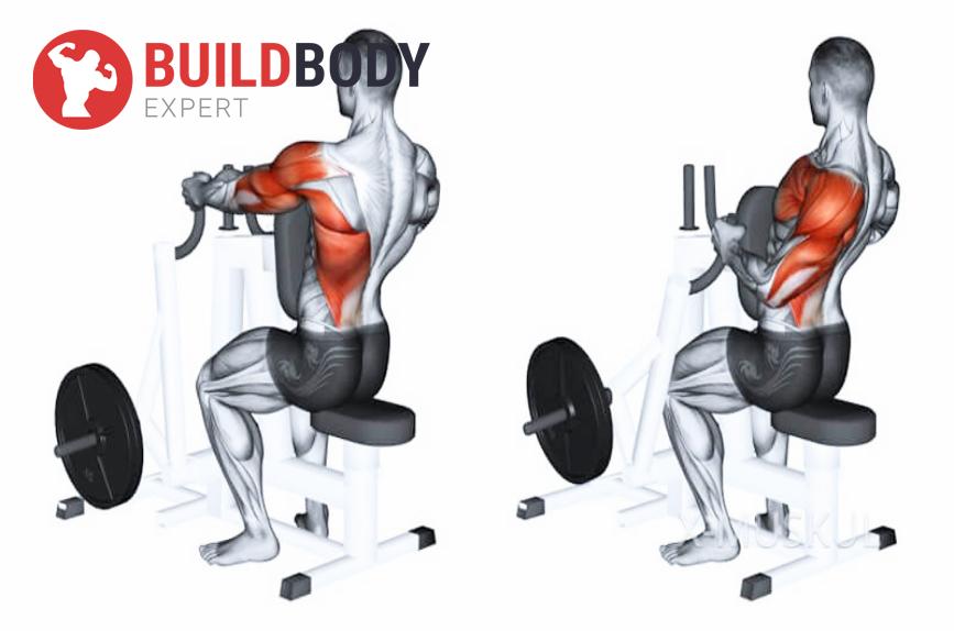 Рычажная тяга: какие задействуются мышцы