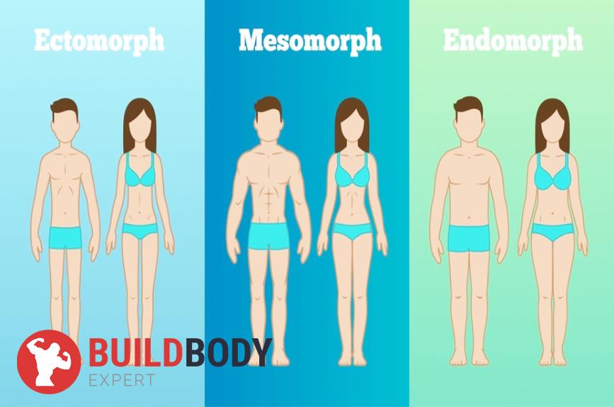 Существует всего три типа телосложения: эндоморф, эктоморф, мезоморф